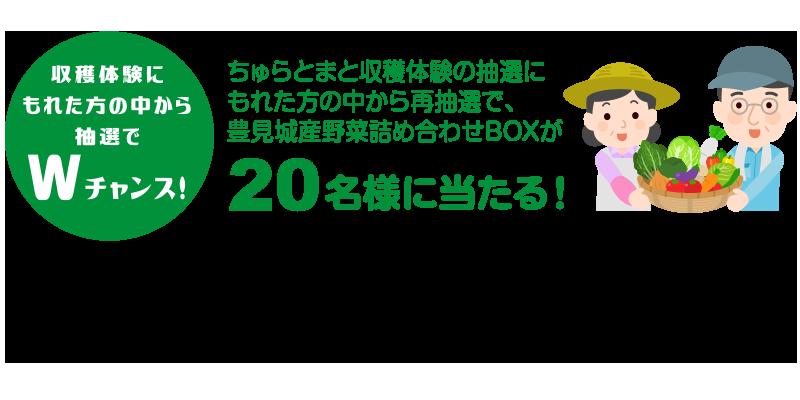 豊見城産野菜詰め合わせBOX20名様にプレゼント